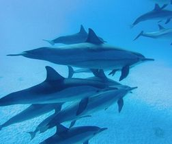 Swimming with Dolphins -Snorkeling Tour-Activities and excursions in M